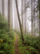 9th Nov 2019 - Path Through the Foggy Woods