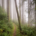 Path Through the Foggy Woods  by jgpittenger