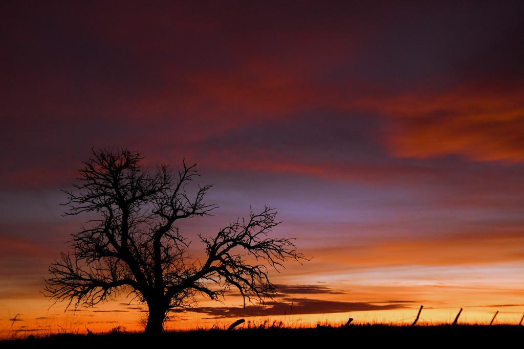 Tree and Multi-colored Kansas Sky by kareenking
