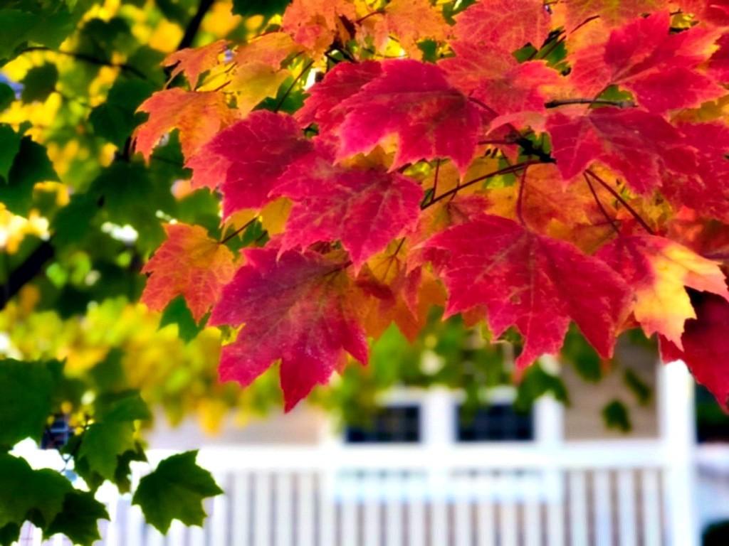 The Heart Of Autumn by gardenfolk