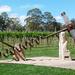 Corkscrew in the Vines