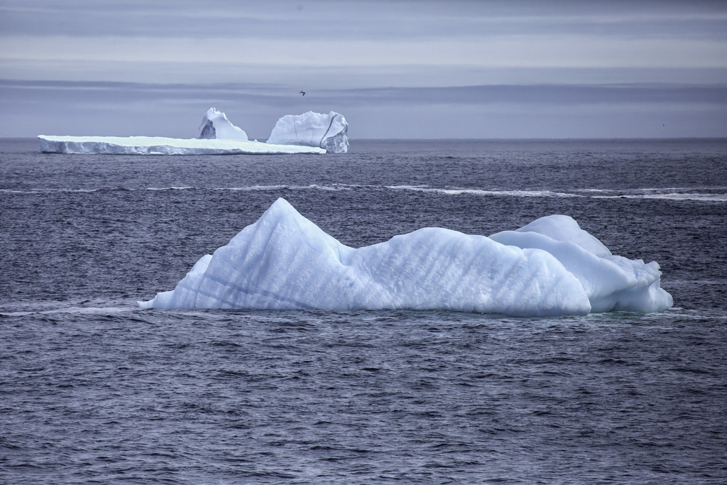 Icebergs ahead!! by pamknowler