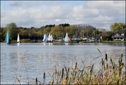 10th Nov 2019 - DSC_2177  The main lake at Priory
