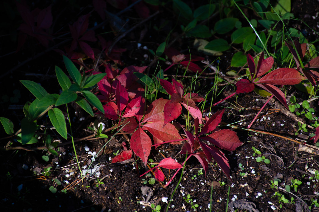 In search of Fall color #2... by thewatersphotos