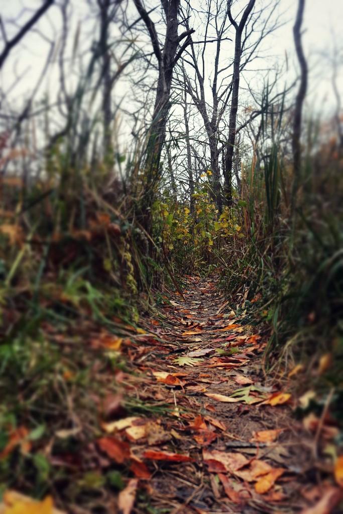 Down the Garden Path by juliedduncan