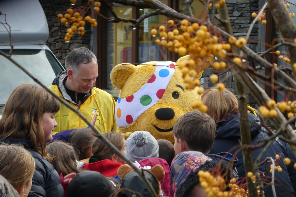 Pudsey is in the village! by anniesue