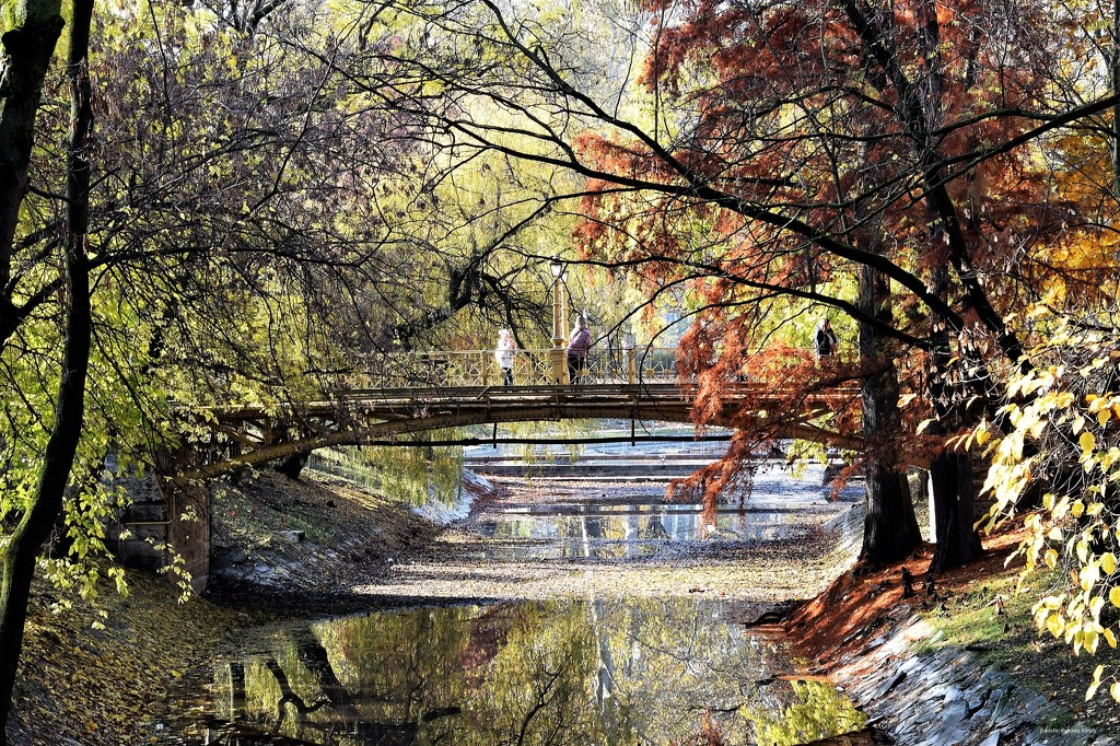 Before noon in the grove..... by kork