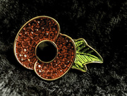 11th Nov 2019 - Wear your poppy with pride
