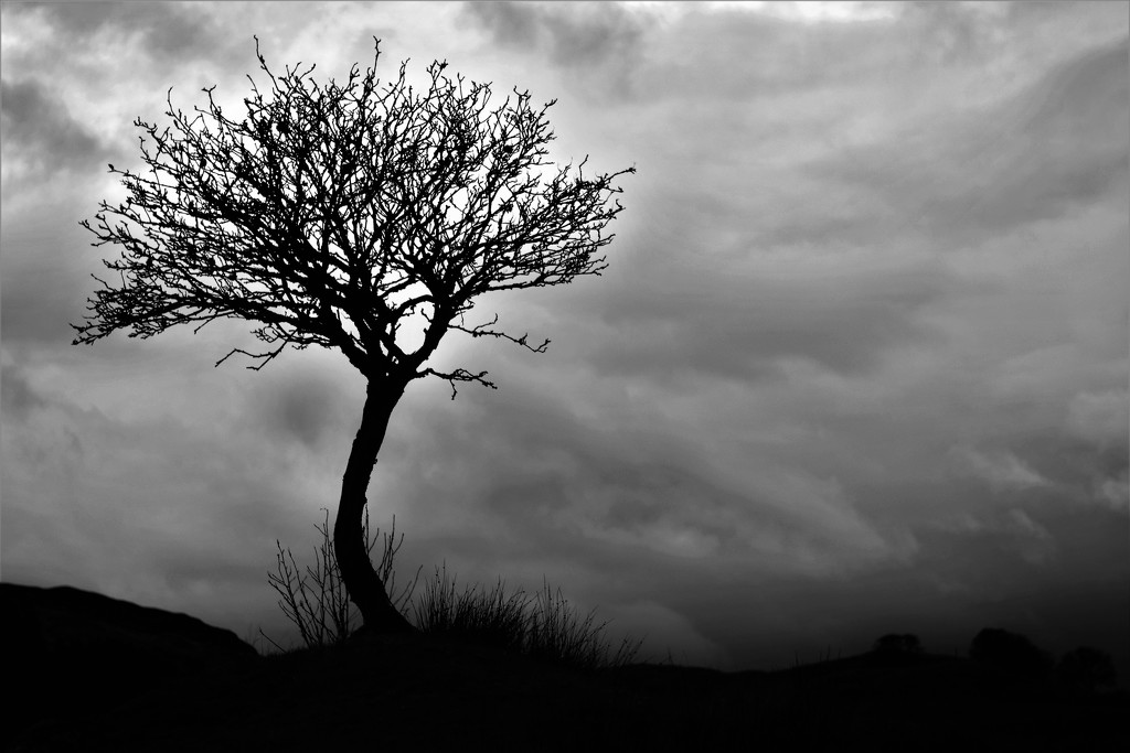 tree and cloud by christophercox