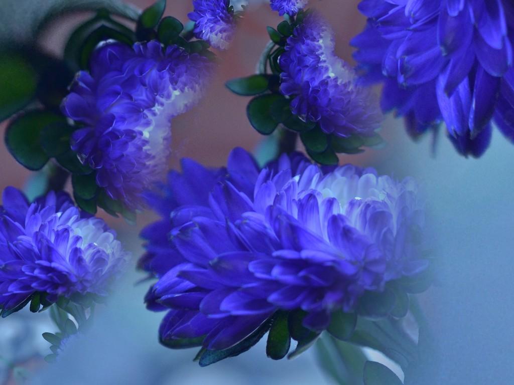 Blue flowers............ by ziggy77