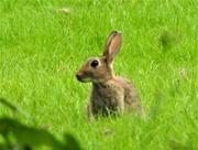 22nd Aug 2019 - Rabbit