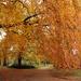 Autumn glory by busylady