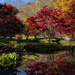 Red Maple Reflection by kvphoto