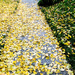 All The Gingko Leaves
