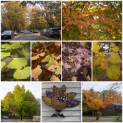 12th Nov 2019 - The Colors of Autumn
