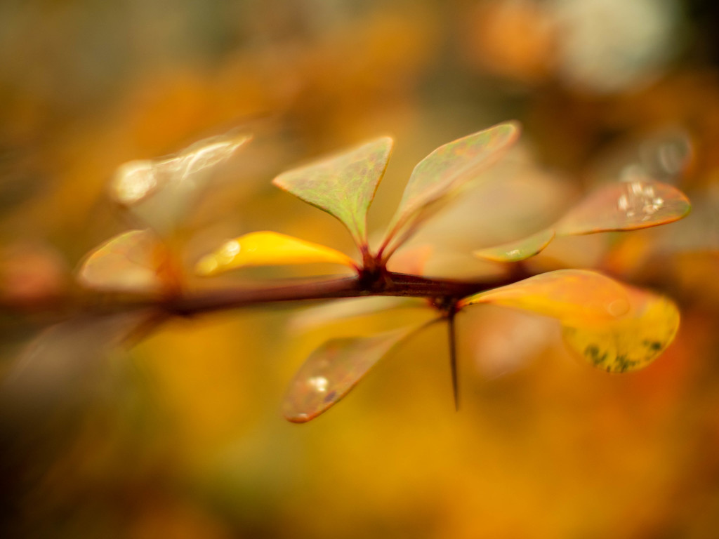 An autumn abstraction by haskar