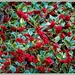 Variagated Holly  by beryl
