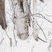 November Words - Trees