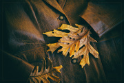 12th Nov 2019 - Holding On To  Autumn