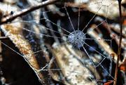 12th Nov 2019 - A Beaded Web