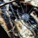 A Beaded Web