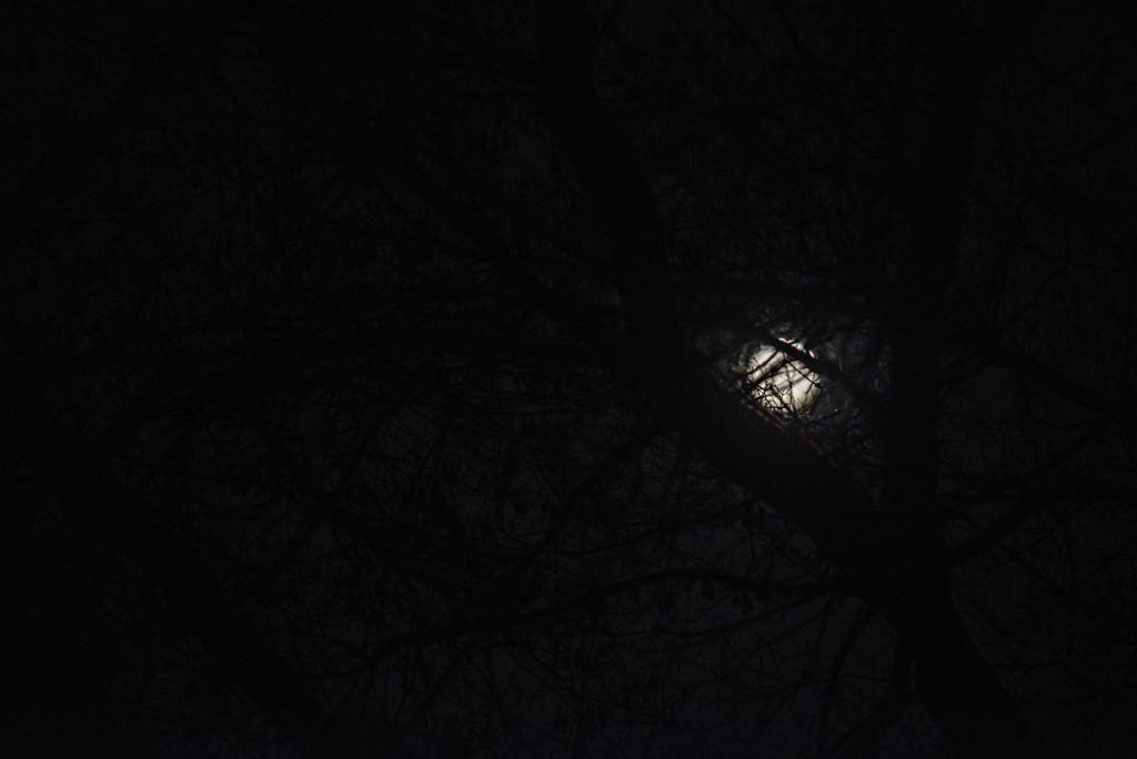 beaver moon by jackies365