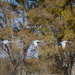 Cranes At Los Poblanos.