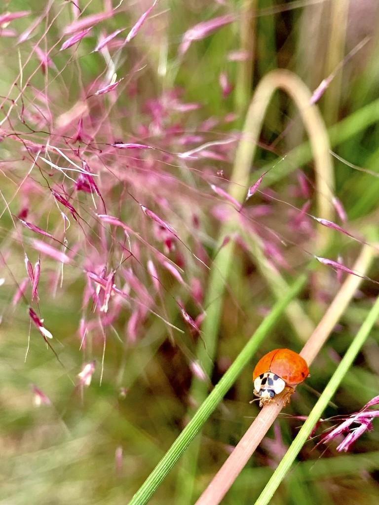 Lady, bug off by riverlandphotos