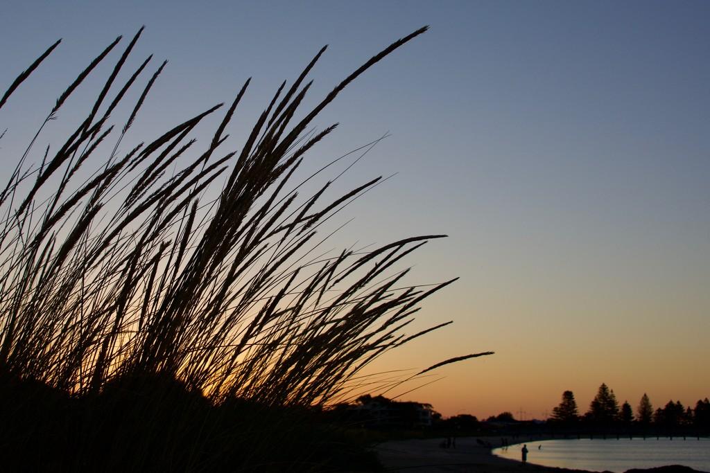 Beach Grass At Sunset DSC_4554 by merrelyn