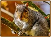 13th Nov 2019 - Friendly Squirrel