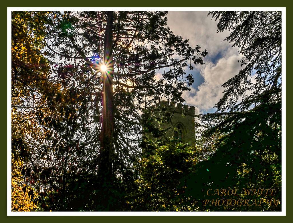 Church Steeple Through The Trees by carolmw