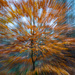 The exploding tree by ellida