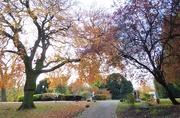 13th Nov 2019 - Museum Gardens