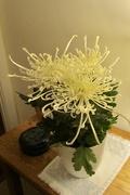 13th Nov 2019 - Spiky Chrysanthemum