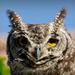 Owl Eyes by salza
