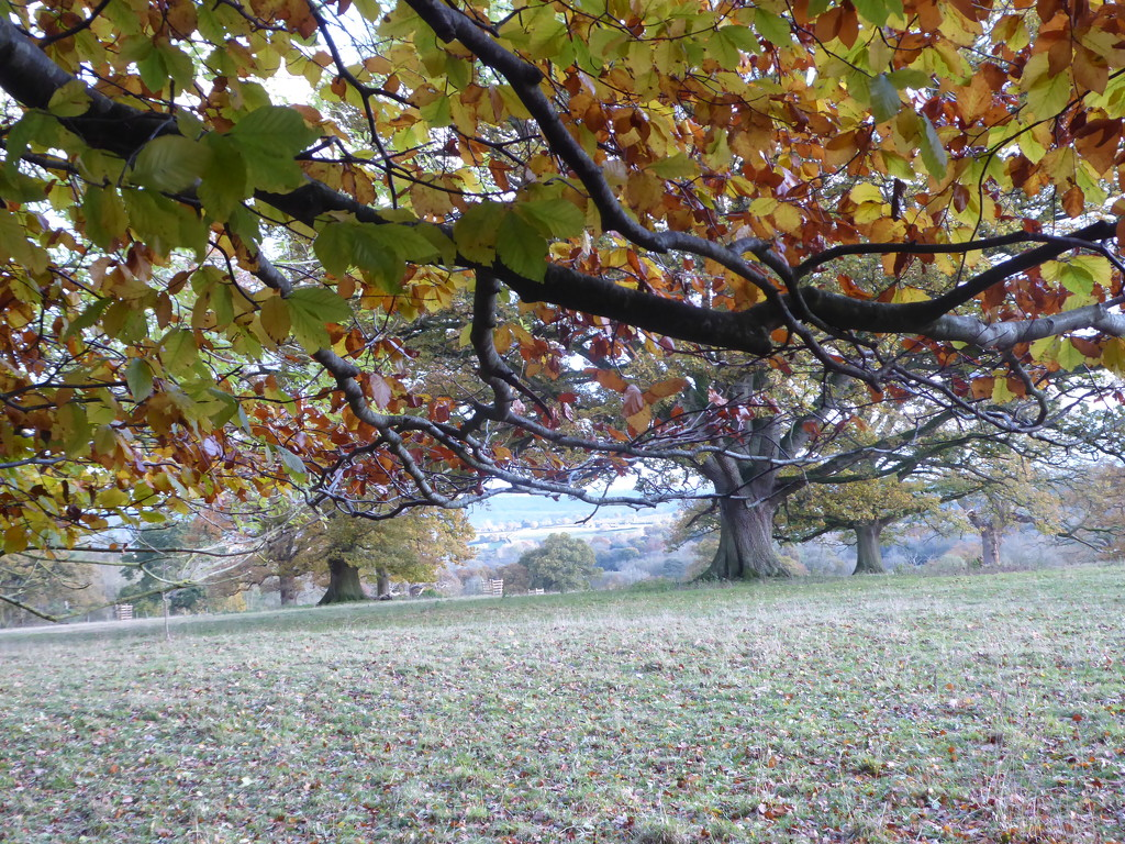 A  walk at  in the grounds of Croft Castle by snowy