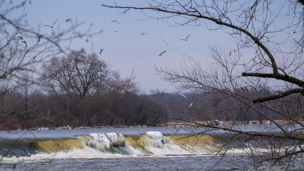 gulls over the dam by rminer