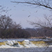 gulls over the dam