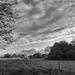 Empty Pasture....