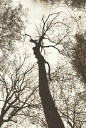 13th Nov 2019 - Wrath of Treebeard