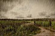 14th Nov 2019 - Rain, rain go away