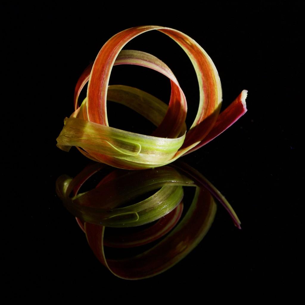 A Reflected Ribbon Of Rhubarb.... _DSC8820 by merrelyn