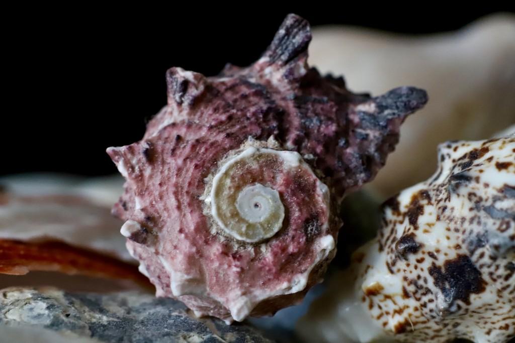 Fibonacci Spiral by carole_sandford