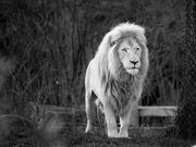 14th Nov 2019 - the lion king