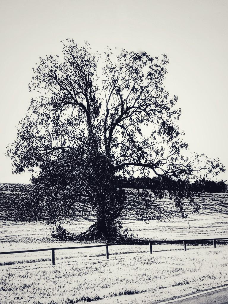 The seasons tree by louannwarren