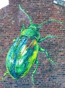 15th Nov 2019 - Street Art - Tansy Beetle
