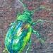 Street Art - Tansy Beetle