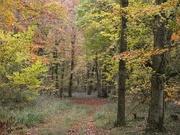15th Nov 2019 - The softness of Autumn