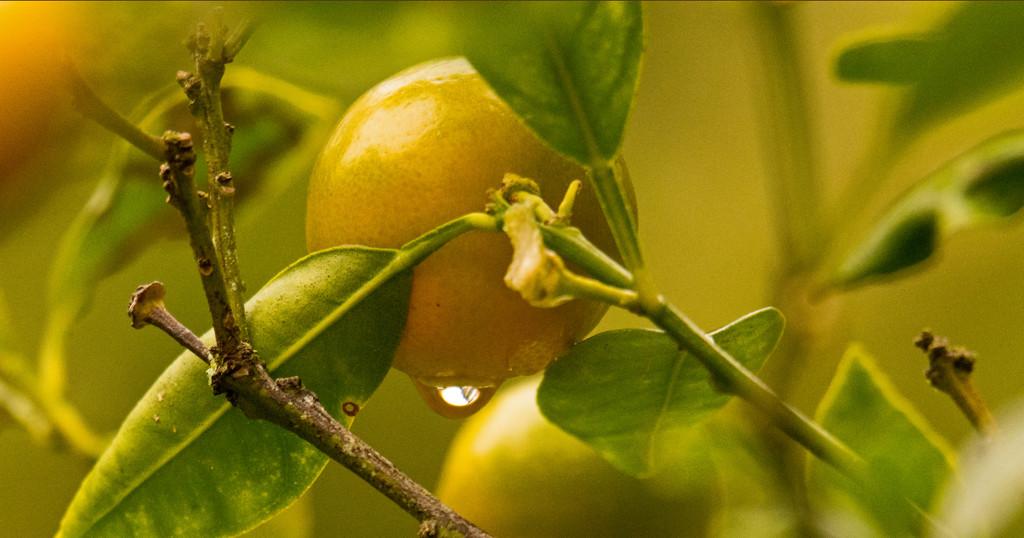 Kumquat and Droplet! by rickster549