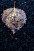 14th Nov 2019 - Rain Drops